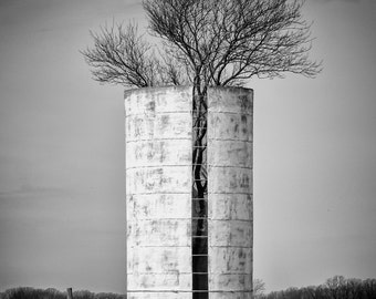 Fine Art Photography Tree Silo in Black and White