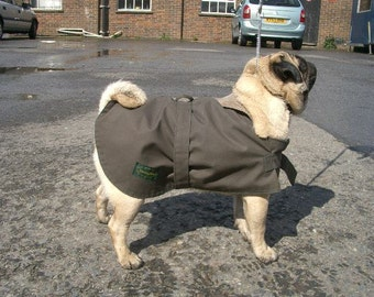 Pug Dog Coat - specially designed for the breed