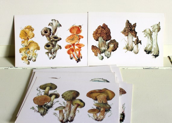 Vintage post cards Mushrooms. Set of vintage 32 naturalistic postcards, 1990