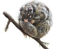 Original Artwork - Green Ringtail Possum