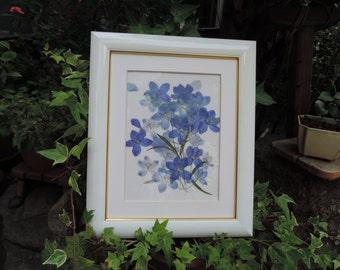 Delphinium framed pressed flowers