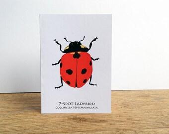 7-Spot Ladybird Card