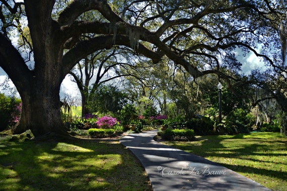GARDEN PATH at Houmas House ~ Louisiana at Large Series ~ Plantation Home ~ Burnside, LA