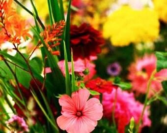 Wildflower Annual Balcony Mix (200+Seeds)