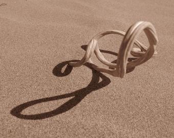 "5""x7"" blank photo card, Twisted piece of driftwood, Morro Bay, CA"