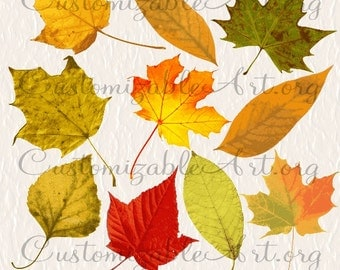 Fall Leaf Clipart Fall Leaves Clip Art Digital Leaf Clip Art Autumn Leaves Brown Red Orange Yellow Leaves Digital Images Graphics Printables