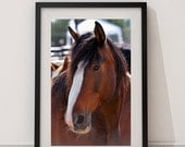 Horse Wall Art Photography - Brown and White - 8x12 - Fine Art Photography - Nature - Animal