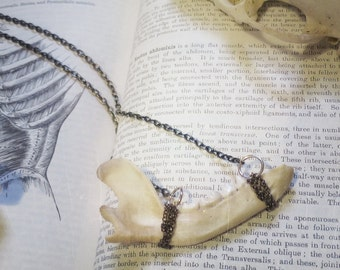 Raccoon Jaw Necklace, Bone Jewelry, Oddities, Curiosities, Taxidermy Jewelry, Vulture Culture