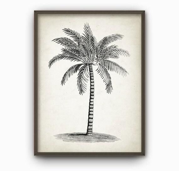 Palm Tree Antique Botanical Wall Art Print By Dreamhouseprints