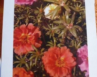 Backyard Eye Candy blank greeting cards