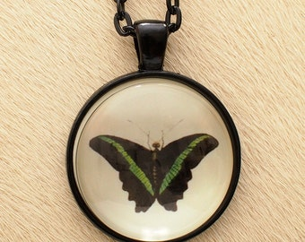 Butterfly 21a - Scientific Illustration - Pendant Necklace - Science Jewelry