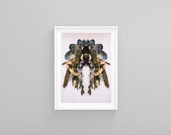 "Fine art Print ""Velella velella"" Unframed, Limited Edition, Modern Photography"