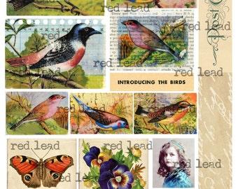 "Digital Bird Collage Sheet - 8-1/2"" x 11"" - Bird 39"