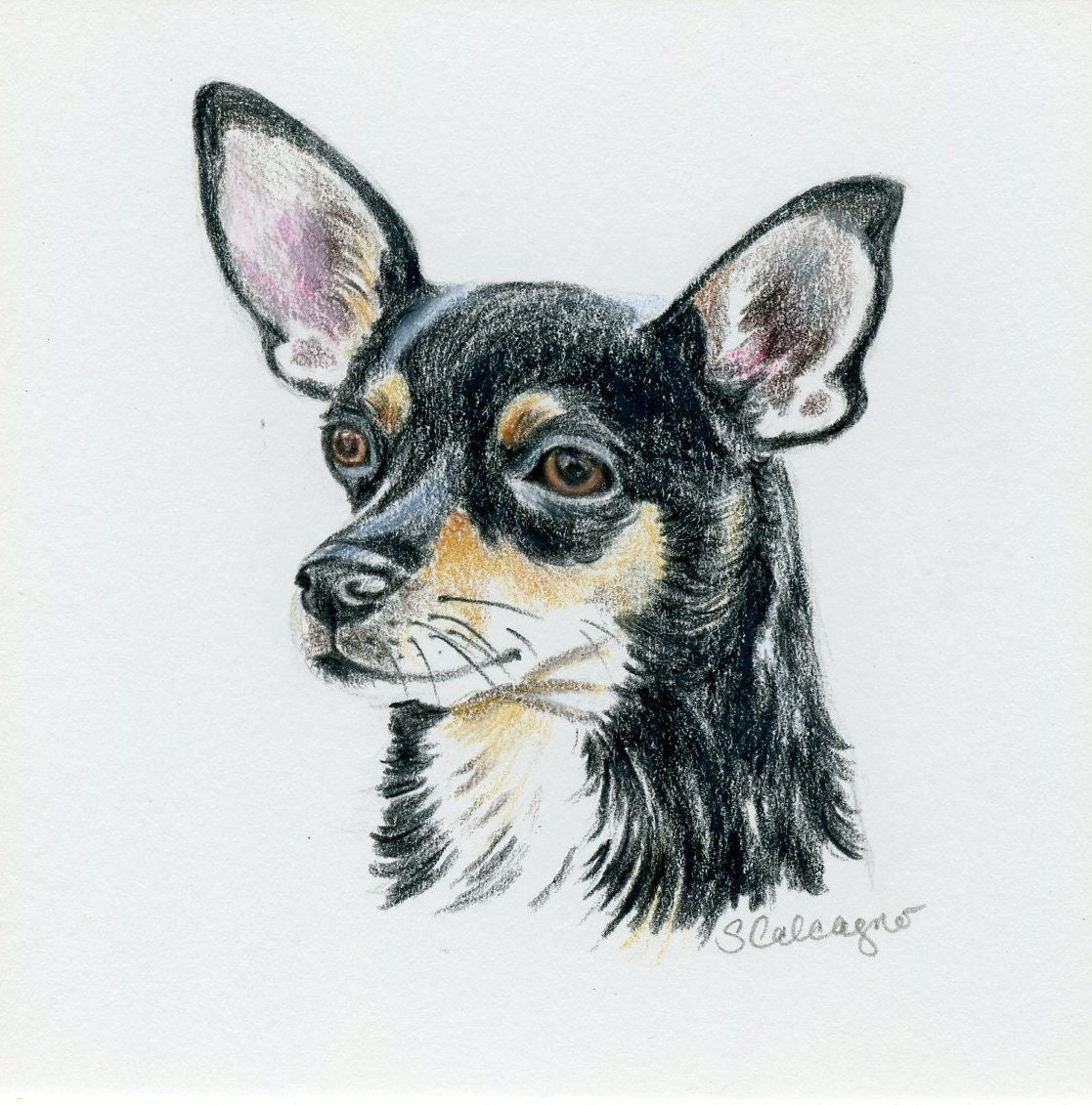 It is a picture of Modest Drawing Of Chihuahua