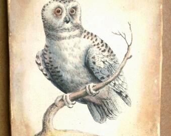 Day Owl 5x7 art tile