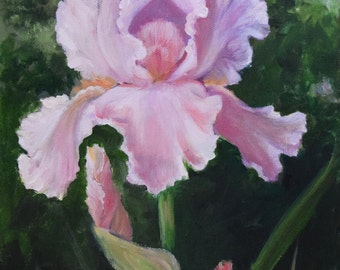 Pink Iris Portrait Still Life Painting,Original Oil on Canvas by Cheri Wollenberg