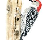 Woodpecker watercolor print  -  woodpecker art - Wild life art - bird watercolor - nursery decor - woodland art - red - black