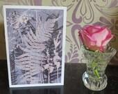 Blank art card greetings cards 6 pack A6  6 x 4 inch Ferns from a Coastal Footpath Modern floral organic botanical design in dusky blue