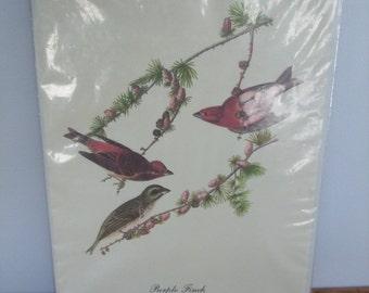 Audubon Bird Print Purple Finch (Carpodacus Purpureus)