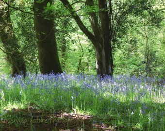 Bluebell Woods Fine Art Photography Download