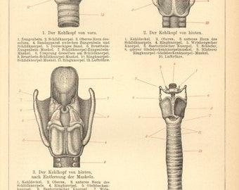 1903 Anatomy of the Larynx or Voice Box Original Antique Engraving