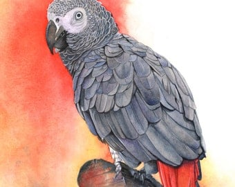 Grey Parrot print of watercolor painting GP2415 - Largest A3 size print wall art print - bird art - art print - wildlife print