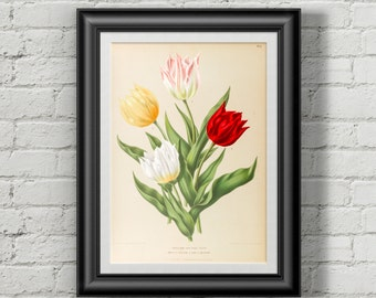 Tulip print. Botanical print. Botanical art. Flower print. Wall art print. Antique botanical prints Tulip Flower illustration print Tulips