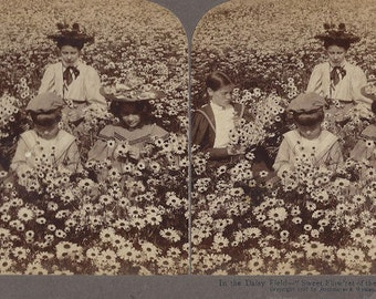 Underwood and Underwood -  Stereoview Card - In the Daisy Field - Copyright 1897 - Strohmeyer and Wyman