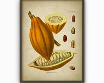 Cocoa Kitchen Wall Art Poster - Vintage Book Plate Illustration - Cocoa Giclee Home Decor Art Print - Botanical Kitchen Wall Art (AB26)