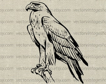 Eagle Vector Clipart, Commercial Use, Graphic Eagle Clip Art, Old Illustration, Instant Download
