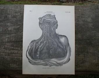 1904 - Human Vascular System Lithograph - Beautiful B&W Plate - Anatomical Illustration - Antique Anatomy Print  -  Dios de la Muerte