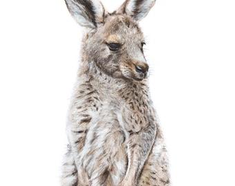 Kangaroo Print 5x7 - Baby Animal - Australian Wildlife Art - Art Print - Australian Nursery Animal Print