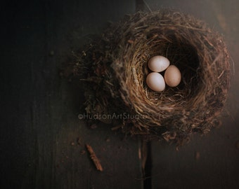 Nest photography 8x10 print Fine Art Photography print Wall art Home decor living room art Farmhouse Decor bird nest print Three eggs nest