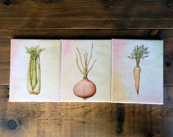 Mirepoix Vegetables Trio: Onion, Carrot, Celery - 8 x 10 Canvas Giclee Prints - Cafe art kitchen decor, Vegan Vegetarian, french cuisine