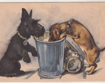 Scotch Terrier And Dachshund Enjoying The Rubbish Bin Unused Postcard