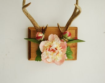 Vintage Deer Antlers on Wood Mount with Peony Flowers & Leaves - Peach Pink Green Wall Hanging Taxidermy 6 Point Boho Home Decor Decoration