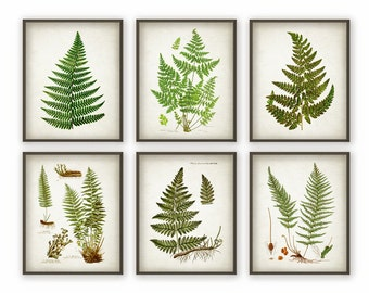 Fern Antique Botanical Print Set of 6 - Vintage Botanical Home Decor Antique Book Plate Illustration Giclee Picture Set of 6 (AB70)