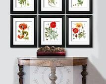 "Summer Bloom Botanical Prints Red Flowers Poppy Wall Art Set of 6 Poppy Art prints, Flowers print set,  5x7"" 8x10"" Gnosis Botanical"