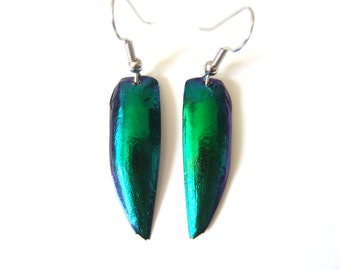 Jewel Beetle Earrings, Real Elytra Beetle Wing Earrings, Green Blue Teal Jewelry