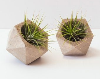 Pair of Baby Concrete Geometric Planters (Plants Included)