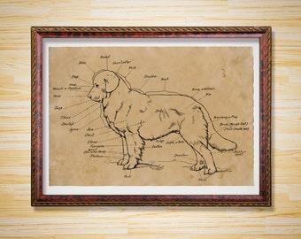 Anatomy poster Animal print Dog scheme decor
