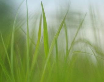 Nature photography digital download, summer photography wall art, home decore, wall decore, digital photography, green photography, fine art
