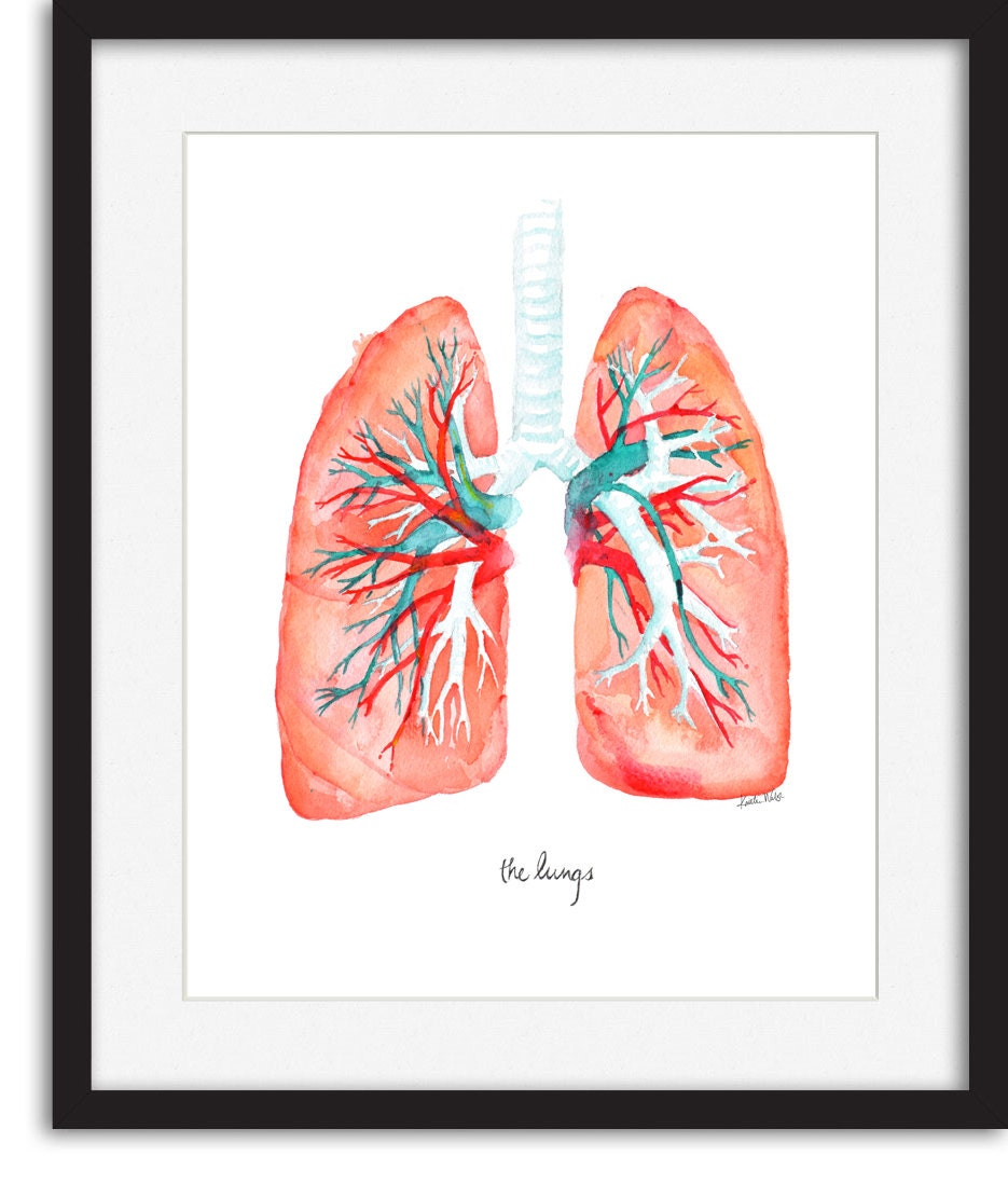 Poster Weights Etsy: Lungs Art Print Lung Watercolor By LyonRoad On Etsy