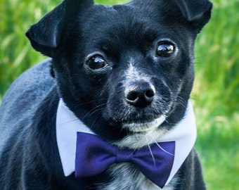 Snappy Purple Bow Tie for Pets