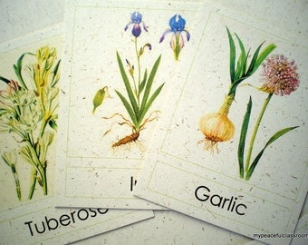 Botanical Illustrations of Flowers: Montessori 3-Part Matching Cards