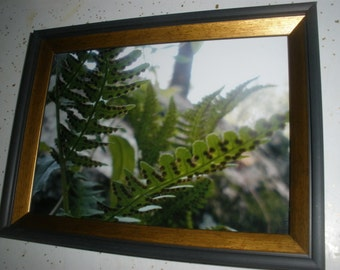 FERN SPORES-Photograph,Unframed color print,3 sizes.Close up-underside of fern leaves,Free Shipping. Nature & wildlife found at MyEyeImagery
