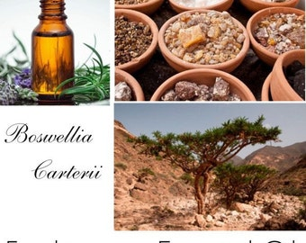 Frankincense Oil, Frankincense Essential Oil, Essential Oil Frankincense -- 100% Pure Authentic Frankincense EO