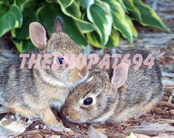 "Baby Bunnies Photo - Bunny Photo - Instant Download - ""Bunny Love"""