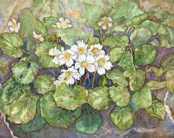 Oconee Bell flower print 9 X 12, giclee reproduction of watercolor with varnish finish, so it can be framed without glass if desired