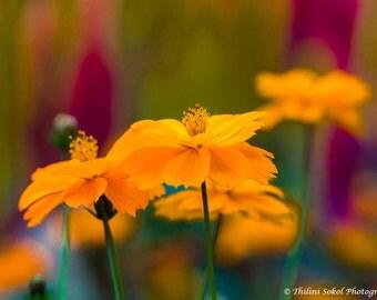 Orange Print Art Flower Photograph Nature Fine Art Print Wall Art Decor Digital Download Print